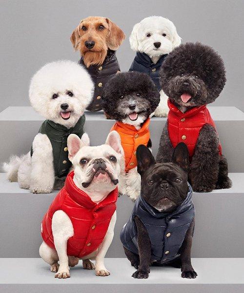 Moncler crée une doudoune pour chiens