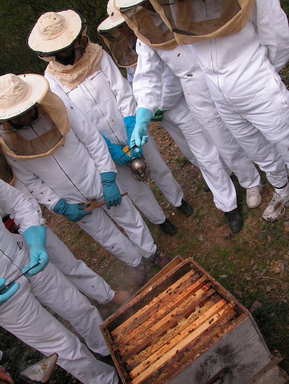 Insolite / Nature • Et si on jouait à l'apiculteur?