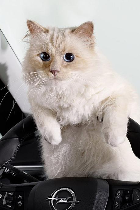 Brigitte Bardot écrit une lettre anti-fourrure à Choupette, la chatte deKarl Lagerfeld !