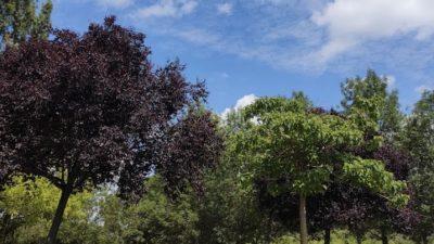 Les bases de Loisirs de l'Essonne viennent de rouvrir (91)